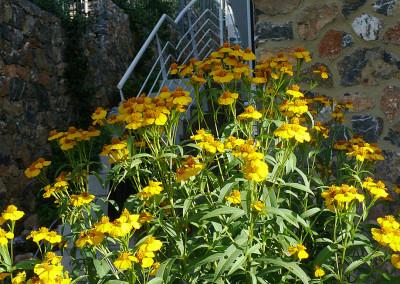 Le piante mediterranee